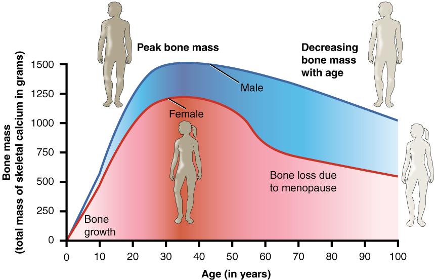 forebygge knogleskørhed