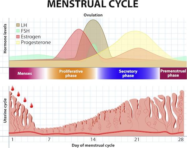 kraftig menstruation i overgangsalderen